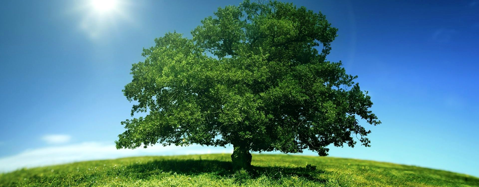 big-green-tree-on-sun-nature-wallpapers-1920x1080